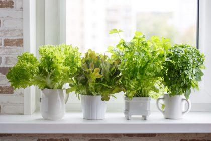 Hogyan nevelj téli konyhakertet – téli fűszernövények és mikrozöldek