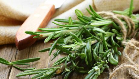 rozmaring az egyik legnépszerűbb gyógy- és fűszernövény
