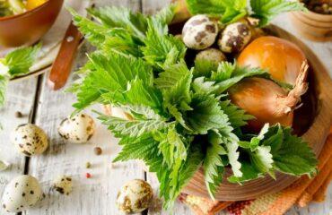 Csalán a sokoldalú gyógynövény! Receptek csalánnal: csalánleves, csalánfőzelék, csalántea